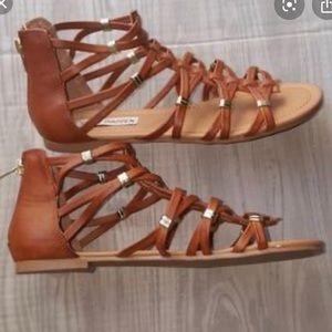 Steve Madden Carleey Gladiator Sandals